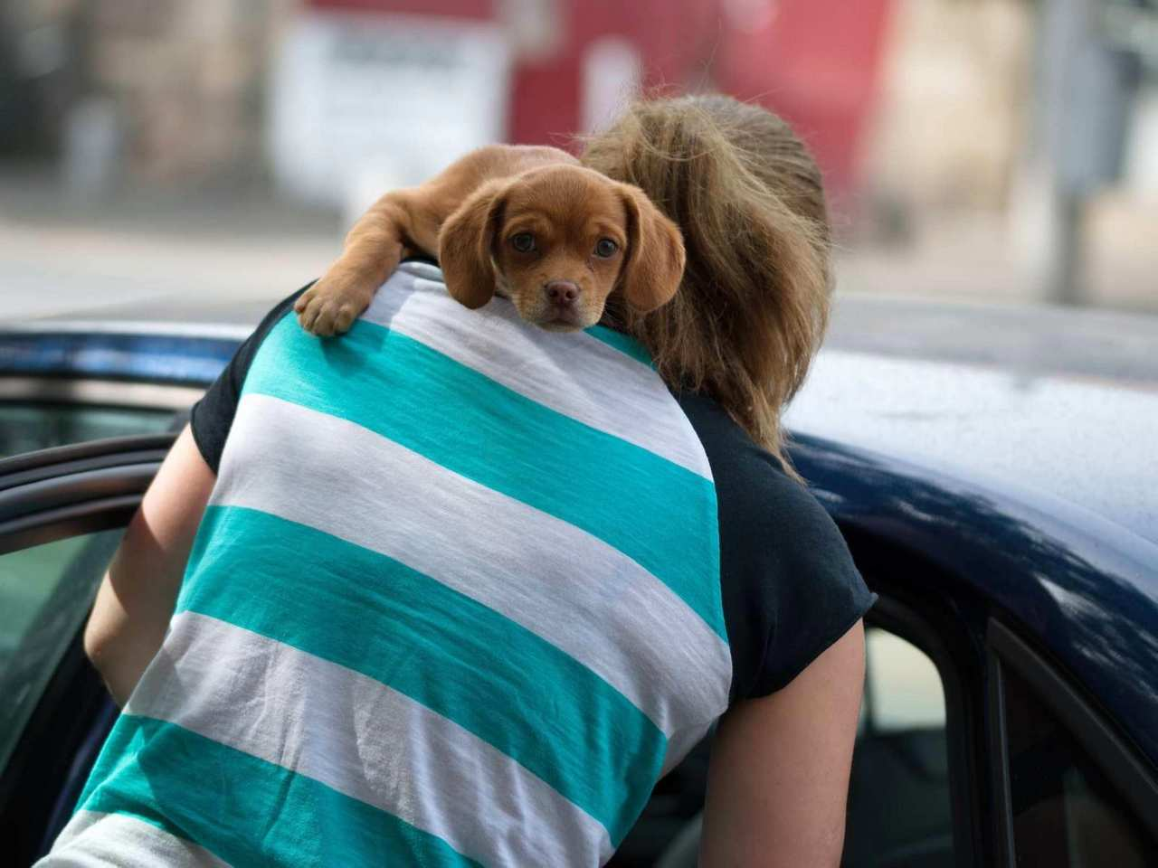 hund, hunde, windhund, schäferhund, dogs, hundenamen